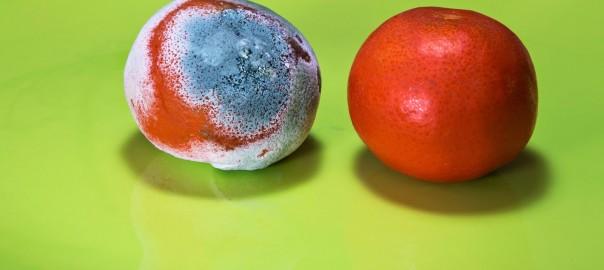 Moldy Oranges | Speedy Refrigerator Service